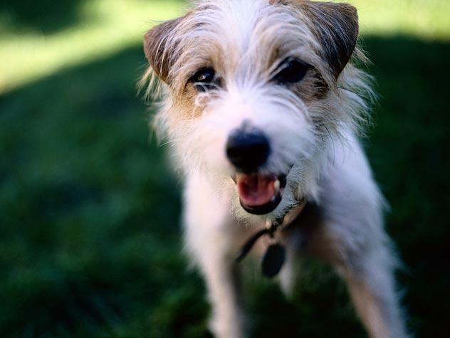 raça de cachorro