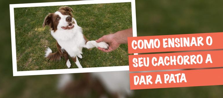 Como Ensinar o Cachorro a Dar a Pata