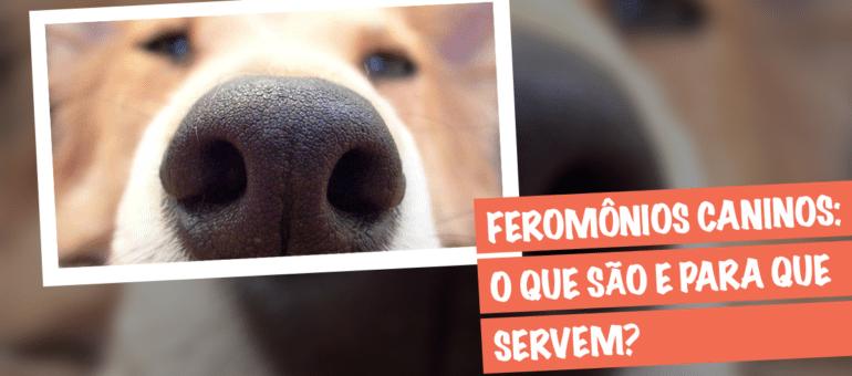 feromonios caninos