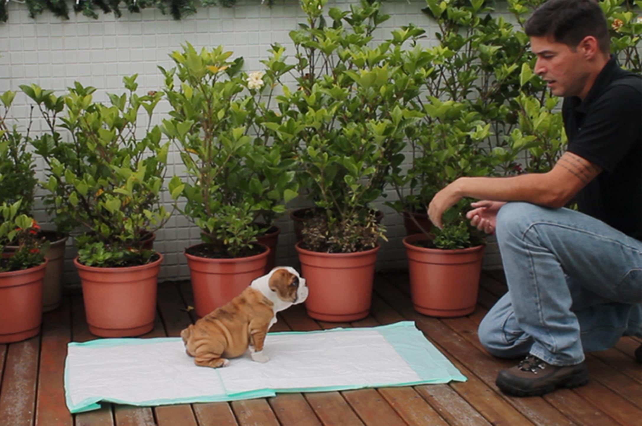 ensinar cachorro a fazer necessidades
